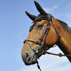 Têtière Évolution In Horse We Trust